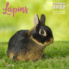 CALENDRIER LAPINS 2022