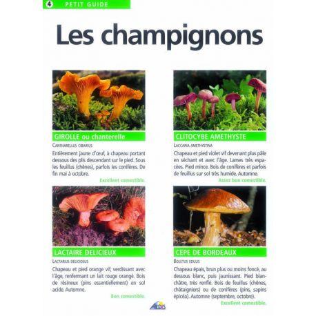 004 - LES CHAMPIGNONS